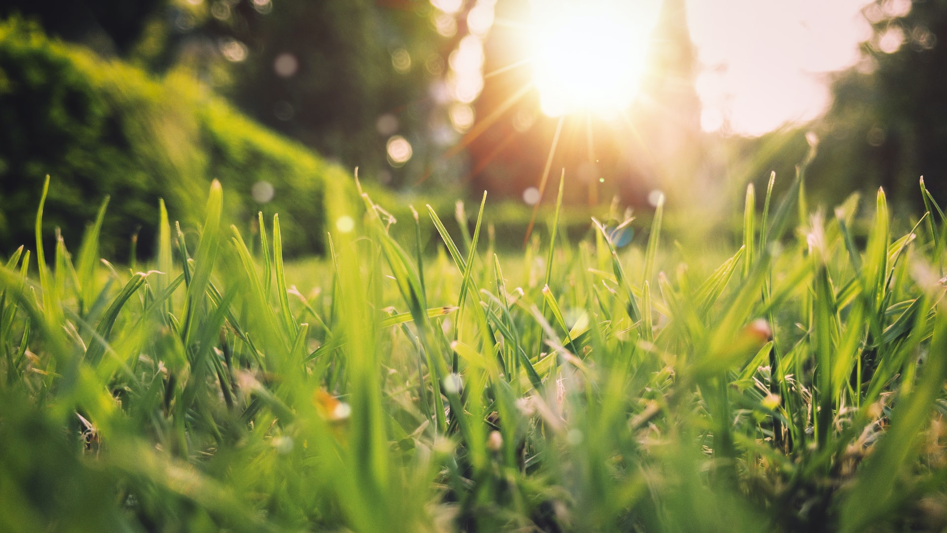 Why Spring's Going to Look Different This Year | Caspersen Brothers March Newsletter